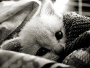 cute-cat-27