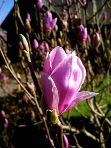 MagnoliaBeauty