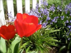 BloomingBeauty