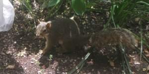 AdorableSquirrel