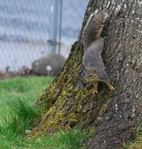 CuteSquirrel