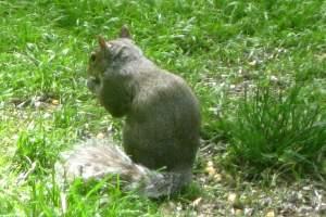 SquirrelEatingHisSnack